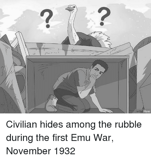 How, War, and Emu: 2  How Civilian hides among the rubble during the first Emu War, November 1932