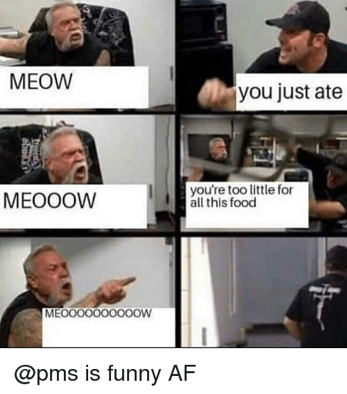 Funny Af: 2  MEOW  you just ate  MEOOOW  you're too little for  all this food  MEOOOO000OOOW @pms is funny AF