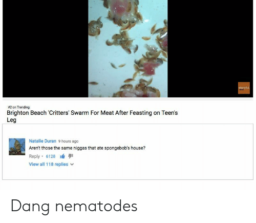 Duran:  #2 on Trending  Brighton Beach Critters' Swarm For Meat After Feasting on Teen's  Leg  Natalie Duran 9 hours ago  Aren't those the same niggas that ate spongebob's house?  Reply-6128 lá 퀴  View all 118 replies v Dang nematodes