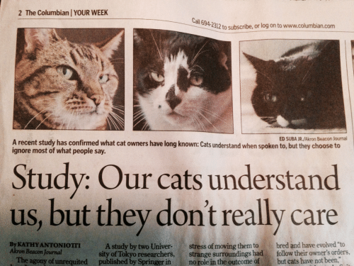 """Not Been: 2 The Columbian YOUR WEEK  all  694-2312 to subscribe, or log on to www.columbian.com  ED SUBA JR./Akron Beacon Journal  A recent study has confirmed what cat owners have long known: Cats understand when spoken to, but they choose to  ignore most of what people say.  Study: Our cats understand  us, but they don't really care  By KATHY ANTONIOTII  Akron Beacon Journal  A study by two Univer-stress of moving them to bred and have evolved """"to  sity of Tokyo researchers, strange surroundings had follow their owner's orders,  The agony of unrequited published by Springer in no role in the outcome of but cats have not been,"""