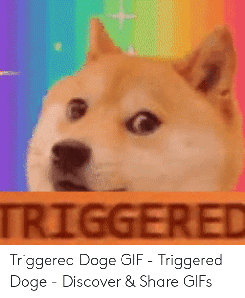 Doge Gif: 2  TRIGGERED Triggered Doge GIF - Triggered Doge - Discover & Share GIFs