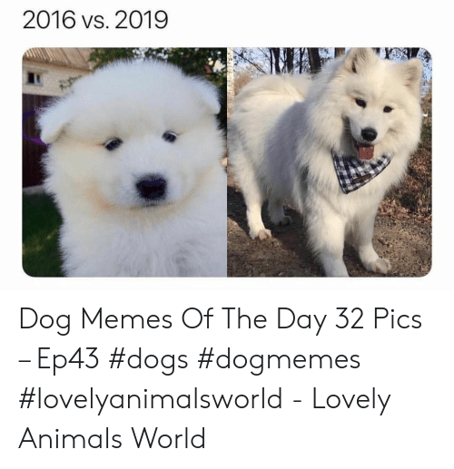 Animals, Dogs, and Memes: 2016 vs. 2019 Dog Memes Of The Day 32 Pics – Ep43 #dogs #dogmemes #lovelyanimalsworld - Lovely Animals World