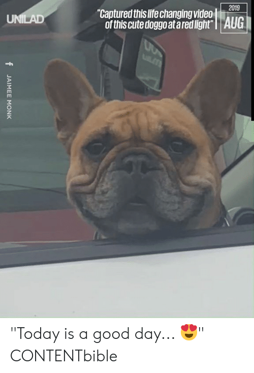 "Cute, Dank, and Life: 2019  ""Captured this life changing video  of this cute doggo at ared light"" 