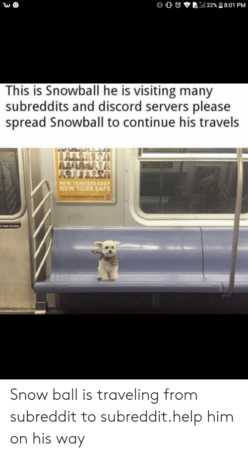 subreddits: 22% 8:01 PM  This is Snowball he is visiting many  subreddits and discord servers please  spread Snowball to continue his travels  NEW YORKERS KEEP  NEW YORK SAFE  tlan on door Snow ball is traveling from subreddit to subreddit.help him on his way