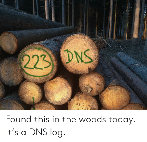 Today, Dns, and Log: 223 DNS Found this in the woods today. It's a DNS log.
