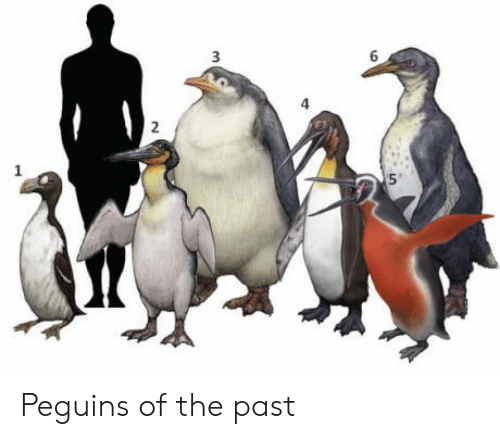 4 3 2: 3  6  4  3  2  1 Peguins of the past
