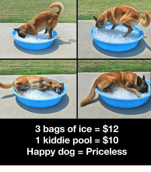 Dank, Happy, and Pool: 3 bags of ice $12  1 kiddie pool - $10  Happy dog - Priceless