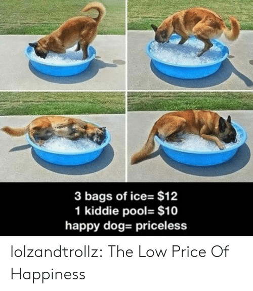 of ice: 3 bags of ice- $12  1 kiddie pool- $10  happy dog- priceless lolzandtrollz:  The Low Price Of Happiness
