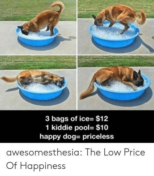of ice: 3 bags of ice- $12  1 kiddie pool- $10  happy dog- priceless awesomesthesia:  The Low Price Of Happiness