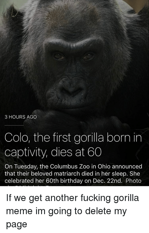 Memes, Ohio, and Announcement: 3 HOURS AGO  Colo, the first gorilla born in  captivity, dies at 60  On Tuesday, the Columbus Zoo in Ohio announced  that their beloved matriarch died in her sleep. She  celebrated her 60th birthday on Dec. 22nd. Photo If we get another fucking gorilla meme im going to delete my page
