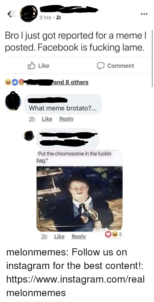 """What Meme: 3 hrs  Bro l just got reported for a meme l  posted. Facebook is fucking lame  Like  Comment  What meme brotato?  3h Like Reply  Put the chromosome in the fuckin  bag.""""  Il  3h Like Reply melonmemes:  Follow us on instagram for the best content!: https://www.instagram.com/realmelonmemes"""