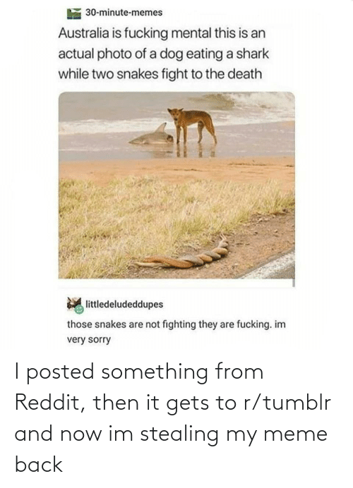 Death: 30-minute-memes  Australia is fucking mental this is an  actual photo of a dog eating a shark  while two snakes fight to the death  littledeludeddupes  those snakes are not fighting they are fucking. im  very sorry I posted something from Reddit, then it gets to r/tumblr and now im stealing my meme back
