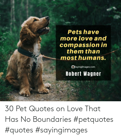 Has No: 30 Pet Quotes on Love That Has No Boundaries #petquotes #quotes #sayingimages