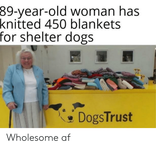 Af, Dogs, and Old Woman: 39-year-old woman has  knitted 450 blankets  for shelter dogs  DogsTrust Wholesome af