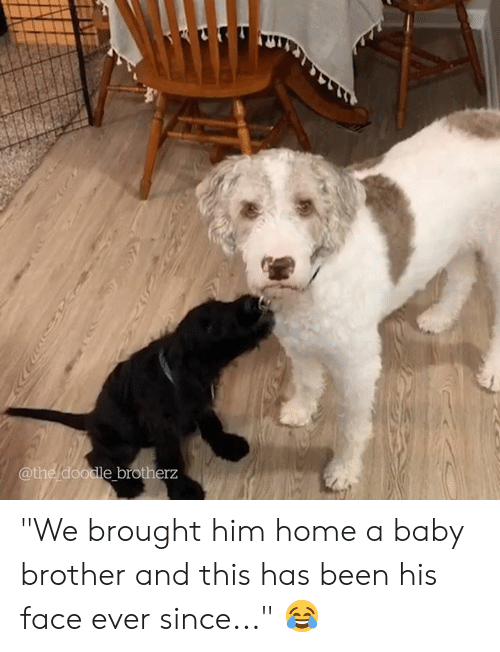 """Doodle, Home, and Baby: 3RORT  @the doodle brotherz """"We brought him home a baby brother and this has been his face ever since..."""" 😂"""