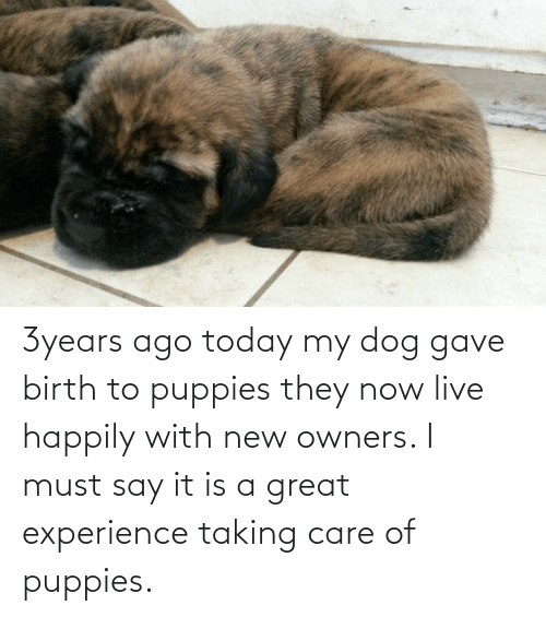 birth: 3years ago today my dog gave birth to puppies they now live happily with new owners. I must say it is a great experience taking care of puppies.