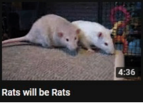 Will and  Rats: 4:36  Rats will be Rats