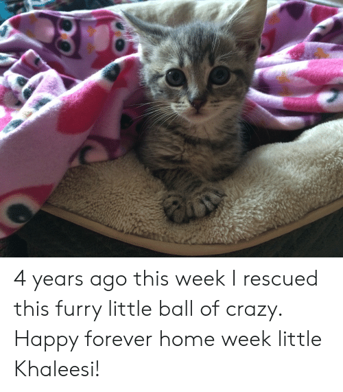 Crazy, Forever, and Happy: 4 years ago this week I rescued this furry little ball of crazy. Happy forever home week little Khaleesi!