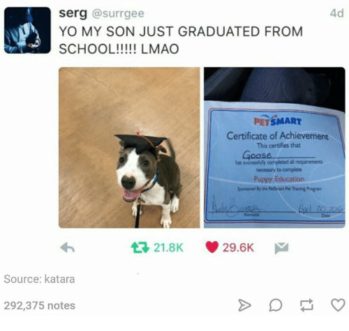 Yo, Petsmart, and Puppy: 4d  serg @surrgee  YO MY SON JUST GRADUATED FROM  PETSMART  Certificate of Achievement  This certifies that  Goose  necessary to complete  Puppy Education  わ  다 21.8K  29.6K  Source: katara  292,375 notes