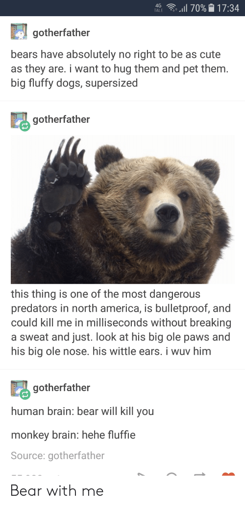 America, Cute, and Dogs: 4G  .11 70%-17:34  gotherfather  bears have absolutely no right to be as cute  as they are. i want to hug them and pet them  big fluffy dogs, supersized  gotherfather  this thing is one of the most dangerous  predators in north america, is bulletproof, and  could kill me in milliseconds without breaking  a sweat and just. look at his big ole paws and  his big ole nose. his wittle ears. i wuv him  gotherfather  human brain: bear will kill vou  monkey brain: hehe fluffie  Source: gotherfather Bear with me