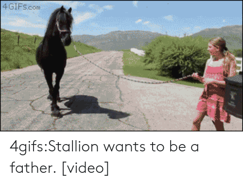 stallion: 4GIF5.conm 4gifs:Stallion wants to be a father.  [video]