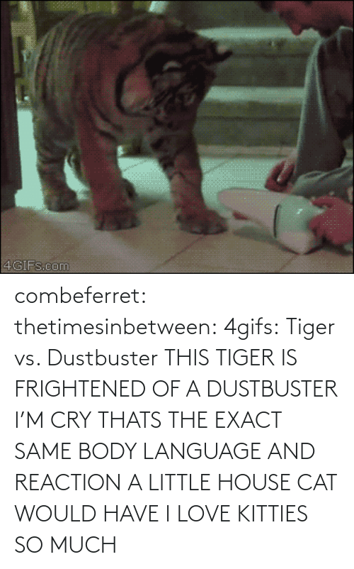 little house: 4GIFS.com combeferret:  thetimesinbetween:  4gifs:  Tiger vs. Dustbuster  THIS TIGER IS FRIGHTENED OF A DUSTBUSTER I'M CRY  THATS THE EXACT SAME BODY LANGUAGE AND REACTION A LITTLE HOUSE CAT WOULD HAVE I LOVE KITTIES SO MUCH