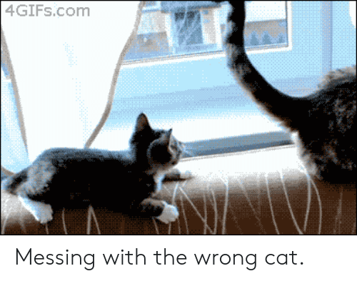 Cat, Com, and Messing: 4GIFS.com Messing with the wrong cat.