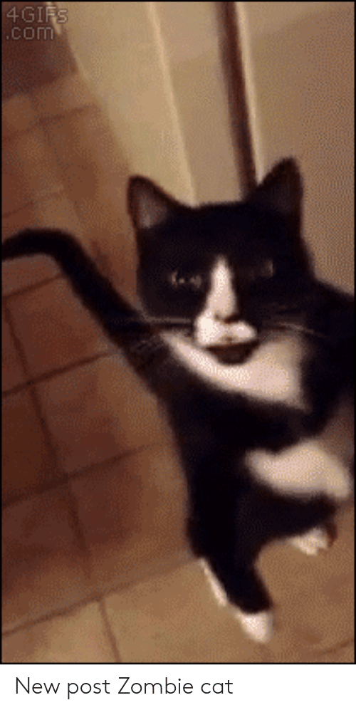 Zombie, Cat, and Com: 4GIFS  .com New post Zombie cat