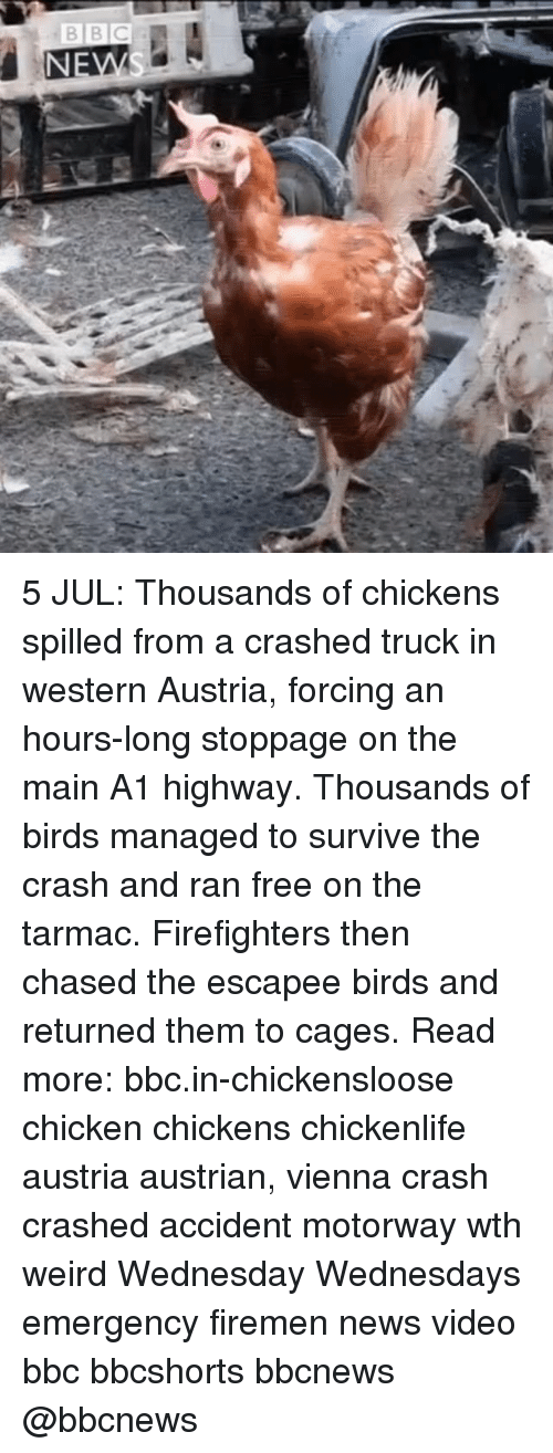 Firemen: 5 JUL: Thousands of chickens spilled from a crashed truck in western Austria, forcing an hours-long stoppage on the main A1 highway. Thousands of birds managed to survive the crash and ran free on the tarmac. Firefighters then chased the escapee birds and returned them to cages. Read more: bbc.in-chickensloose chicken chickens chickenlife austria austrian, vienna crash crashed accident motorway wth weird Wednesday Wednesdays emergency firemen news video bbc bbcshorts bbcnews @bbcnews