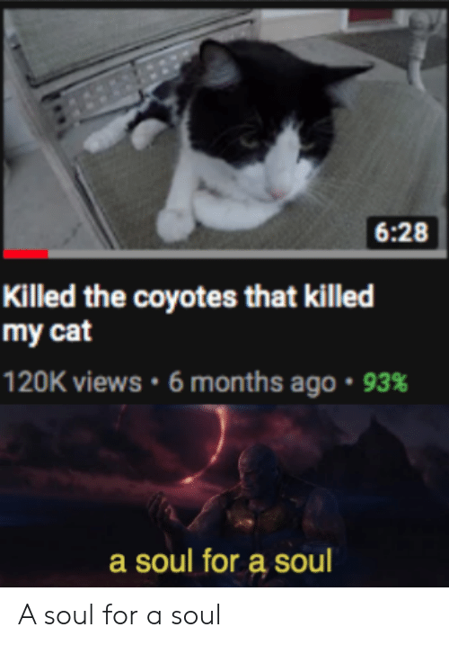 Reddit, Cat, and Soul: 6:28  Killed the coyotes that killed  my cat  120K views . 6 months ago . 93%  a soul for a soul A soul for a soul