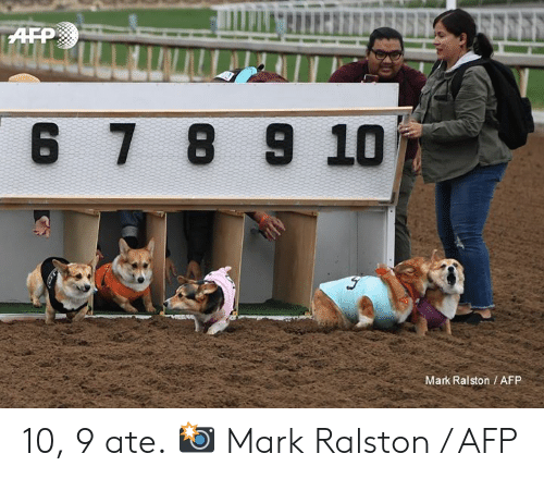 Dank, 🤖, and Afp: 6 7 8 9 10  Mark Ralston/AFP 10, 9 ate.  📸 Mark Ralston / AFP