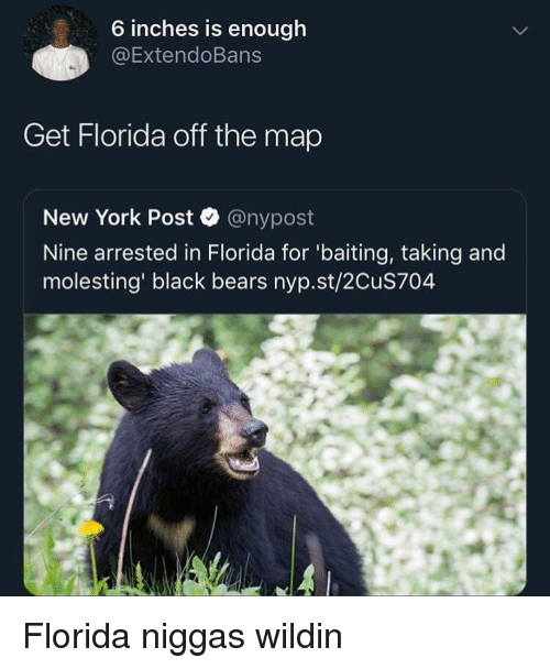 New York, New York Post, and Bears: 6 inches is enough  @ExtendoBans  Get Florida off the map  New York Post @nypost  Nine arrested in Florida for 'baiting, taking and  molesting' black bears nyp.st/2CuS704 Florida niggas wildin