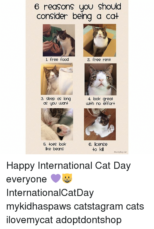 Cats, Food, and Memes: 6 reasons you should  consider being a cat  l free food  2. free rent  3. Sleep as long  as you uwant  4 look great  with no effort  6. toes look  ike beans  6. license  to kil  MontyBoy.net Happy International Cat Day everyone 💜😺 InternationalCatDay mykidhaspaws catstagram cats ilovemycat adoptdontshop