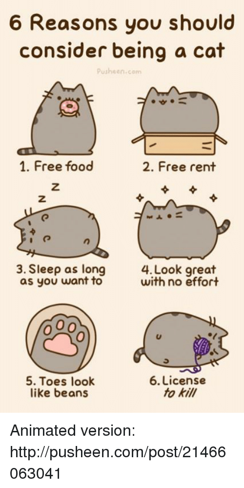 Food, Memes, and 🤖: 6 Reasons you should  consider being a cat  Pusheen.com  1. Free food  2. Free rent  3. Sleep as long  4. Look great  with no effort  as you want to  5. Toes look  6. License  fo kill  like beans Animated version: http://pusheen.com/post/21466063041