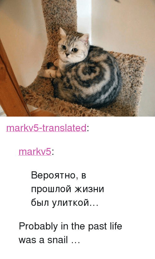 """Life, Tumblr, and Blog: 60 <p><a href=""""https://markv5-translated.tumblr.com/post/173856043908/markv5-%D0%B2%D0%B5%D1%80%D0%BE%D1%8F%D1%82%D0%BD%D0%BE-%D0%B2-%D0%BF%D1%80%D0%BE%D1%88%D0%BB%D0%BE%D0%B9-%D0%B6%D0%B8%D0%B7%D0%BD%D0%B8-%D0%B1%D1%8B%D0%BB-%D1%83%D0%BB%D0%B8%D1%82%D0%BA%D0%BE%D0%B9"""" class=""""tumblr_blog"""">markv5-translated</a>:</p> <blockquote> <p><a href=""""https://markv5.tumblr.com/post/173830255746/%D0%B2%D0%B5%D1%80%D0%BE%D1%8F%D1%82%D0%BD%D0%BE-%D0%B2-%D0%BF%D1%80%D0%BE%D1%88%D0%BB%D0%BE%D0%B9-%D0%B6%D0%B8%D0%B7%D0%BD%D0%B8-%D0%B1%D1%8B%D0%BB-%D1%83%D0%BB%D0%B8%D1%82%D0%BA%D0%BE%D0%B9"""" class=""""tumblr_blog"""">markv5</a>:</p> <blockquote><p>Вероятно, в прошлой жизни был улиткой…</p></blockquote> <p>Probably in the past life was a snail …</p> </blockquote>"""