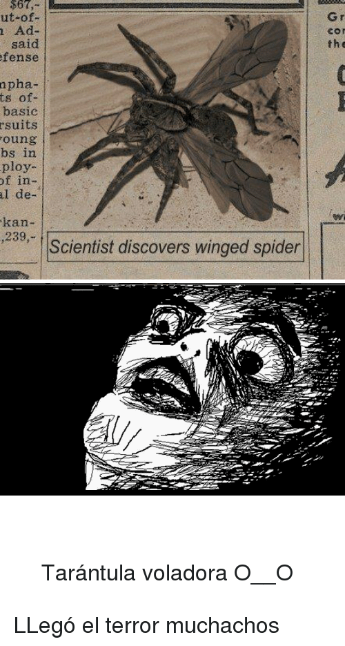 Kan: $67,u  ut of  Gr  Ad-  said  fense  the  pha-  ts of-  basic  suits  oung  bs in  ploy  f in-  de-  l  kan-  239,-  Scientist discovers winged spider <blockquote> <p><br/>Tarántula voladora O__O</p> </blockquote> <p>LLegó el terror muchachos</p>