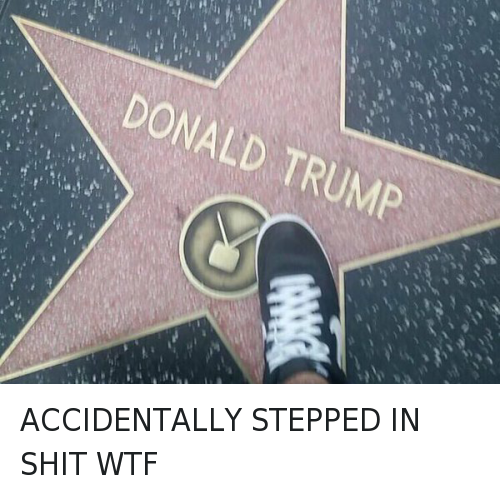 Top 20 Donald Trump Memes - 02/19/2016: ACCIDENTALLY STEPPED IN SHIT WTF