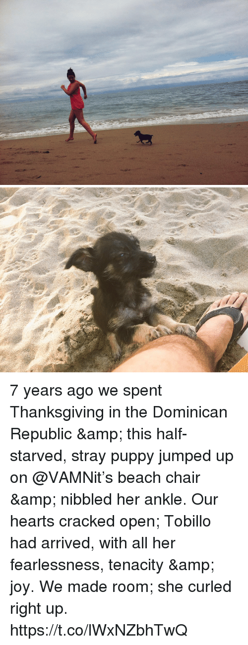 Dominican: 7 years ago we spent Thanksgiving in the Dominican Republic & this half-starved, stray puppy jumped up on @VAMNit's beach chair & nibbled her ankle. Our hearts cracked open; Tobillo had arrived, with all her fearlessness, tenacity & joy. We made room; she curled right up. https://t.co/lWxNZbhTwQ