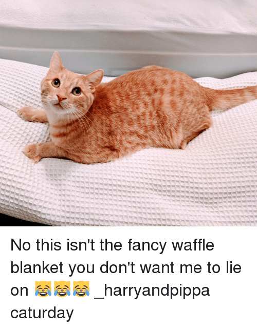 fanciness: 7H7( No this isn't the fancy waffle blanket you don't want me to lie on 😹😹😹 _harryandpippa caturday