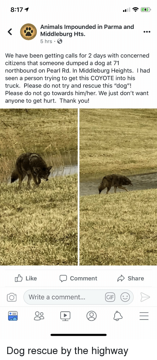 """Animals, Facepalm, and Gif: 8:17 T  Animals Impounded in Parma and  Middleburg Hts.  5 hrs.  We have been getting calls for 2 days with concerned  citizens that someone dumped a dog at 71  northbound on Pearl Rd. In Middleburg Heights. I had  seen a person trying to get this COYOTE into his  truck. Please do not try and rescue this """"dog""""!  Please do not go towards him/her. We just don't want  anyone to get hurt. Thank you!  uLike  Share  Comment  Write a comment...  GB0>  GIF) ( Dog rescue by the highway"""