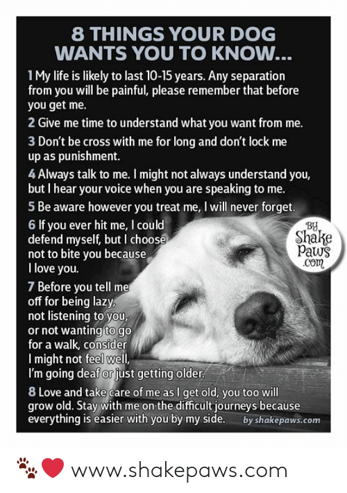 separation: 8 THINGS YOUR DOG  WANTS YOU TO KNOW...  1My life is likely to last 10-15 years. Any separation  from you will be painful, please remember that before  you get me.  2 Give me time to understand what you want from me.  3 Don't be cross with me for long and don't lock me  up as punishment.  4 Always talk to me. I might not always understand you,  but I hear your voice when you are speaking to me.  5 Be aware however you treat me, I will never forget.  By  Shake  Paws  .com  6 If you ever hit me, I could  defend myself, but I choose  not to bite you because  I love you.  7 Before you tell me  off for being lazy,  not listening to you,  or not wanting to go  for a walk, consider  Imight not feel well,  I'm going deaf or just getting older  8 Love and take care of me as I get old, you too will  grow old. Stay with me on the difficult journeys because  everything is easier with you by my side.  by shakepaws.com 🐾❤️ www.shakepaws.com