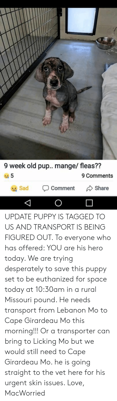Girardeau: 9 week old pup.. mange/ fleas??  5  9 Comments  Sad  Share  Comment UPDATE PUPPY IS TAGGED TO US AND TRANSPORT IS BEING FIGURED OUT. To everyone who has offered: YOU are his hero today.   We are trying desperately to save this puppy set to be euthanized for space today at 10:30am in a rural Missouri pound. He needs transport from Lebanon Mo to Cape Girardeau Mo this morning!!! Or a transporter can bring to Licking Mo but we would still need to Cape Girardeau Mo. he is going straight to the vet here for his urgent skin issues.   Love, MacWorried