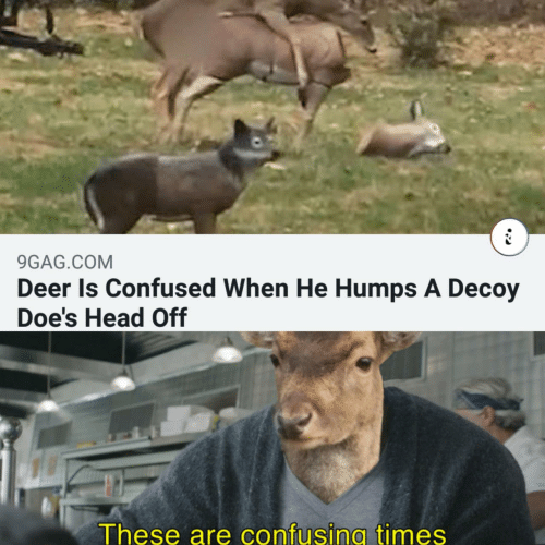 When He: 9GAG.COM  Deer Is Confused When He Humps A Decoy  Doe's Head Off  These are confusing times