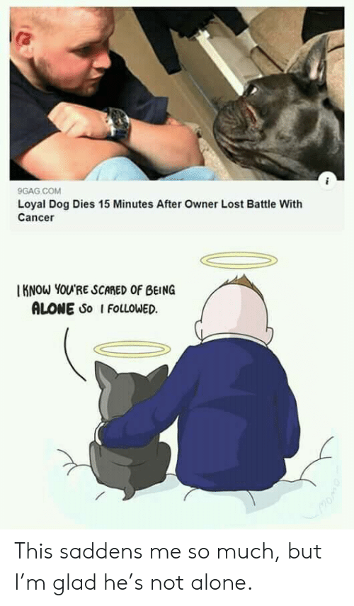 9gag, Being Alone, and Lost: 9GAG COM  Loyal Dog Dies 15 Minutes After Owner Lost Battle With  Cancer  KNOW YOU'RE SCARED OF BEING  ALONE So I FOLLOWED This saddens me so much, but I'm glad he's not alone.