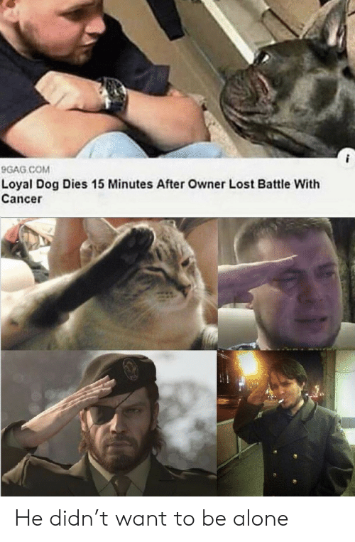 9gag, Being Alone, and Lost: 9GAG COM  Loyal Dog Dies 15 Minutes After Owner Lost Battle With  Cancer He didn't want to be alone