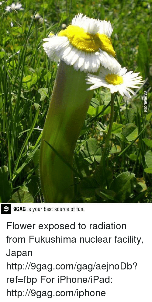 fukushima: 9GAG is your best source of fun. Flower exposed to radiation from Fukushima nuclear facility, Japan