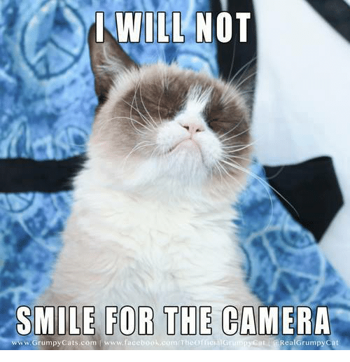 smile for the camera: I WILL NOT  SMILE FOR THE CAMERA  www.Grumpy Cats com www.faceb  Real Grumpy Cat
