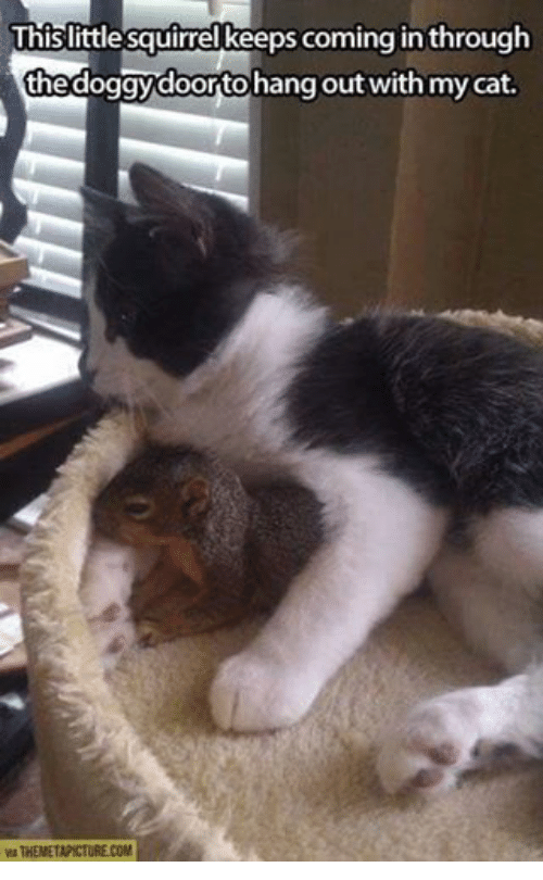 mycat: Thislittle squirrel keeps coming in through  the doggy doortohang out with mycat.  VIA THEMETAPICTURE.COM