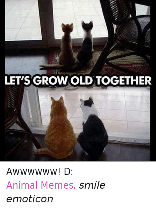 Meme Smile: LET'S GROWOLD TOGETHER Awwwwww! D:  Animal Memes. smile emoticon