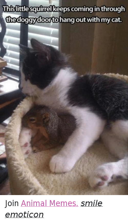 Meme Smile: This little squirrel keeps coming in through  thedoggydoortohang out with mycat. Join Animal Memes. smile emoticon